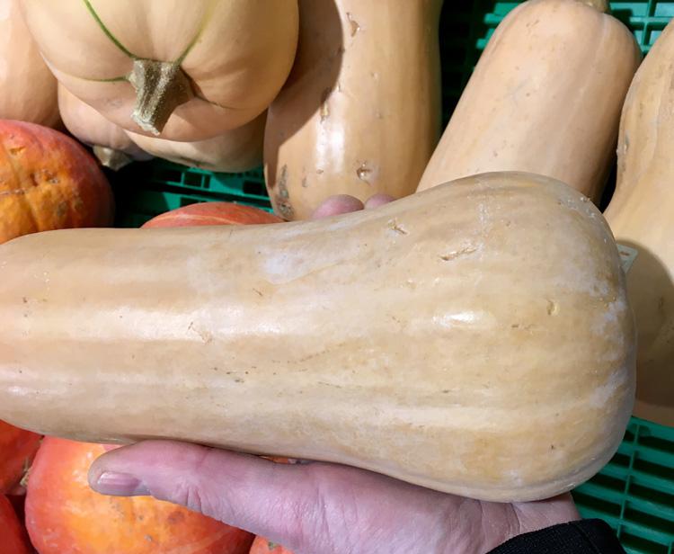 butternut-plouharnel